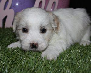 6 week puppy