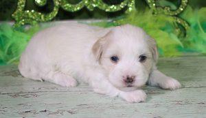 4 week puppy